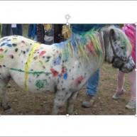 buntes-pony